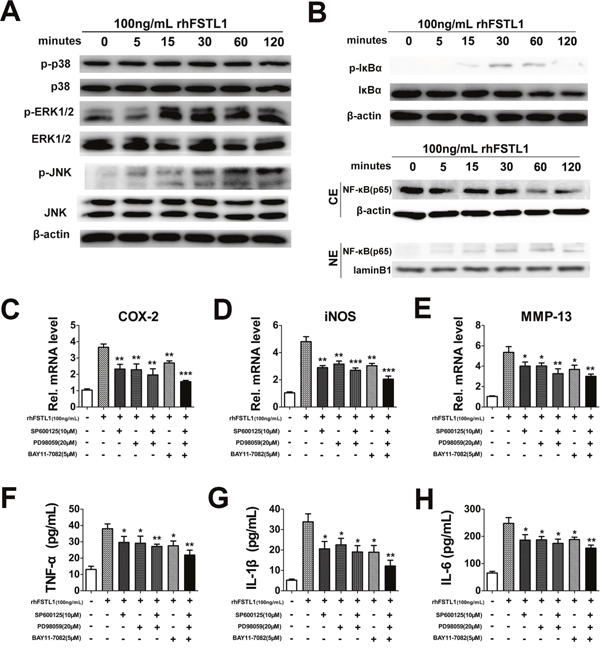FSTL1 activated the JNK/MAPK, ERK1/2/MAPK and NF-κB signaling pathways; blocking the JNK/MAPK, ERK1/2/MAPK and NFκB pathways inhibited FSTL1-mediated expression of cytokines.