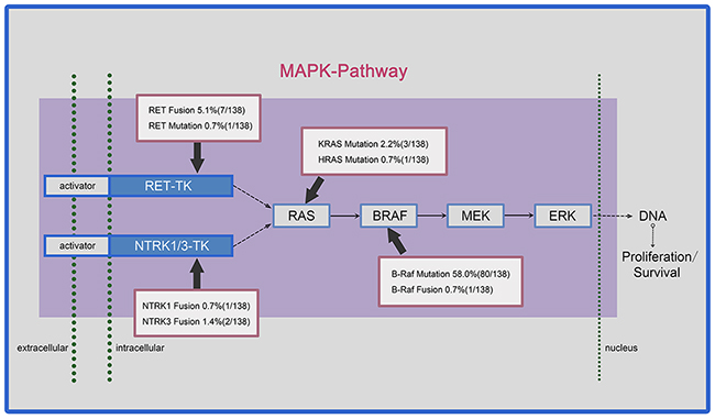 Prevalence of somatic mutations and chromosomal rearrangements in papillary thyroid carcinoma (PTC) affecting the MAPK pathway.