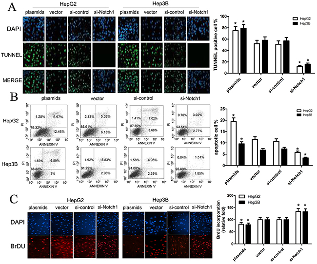 Notch1 affects apoptosis of HepG2 and Hep3B cells.