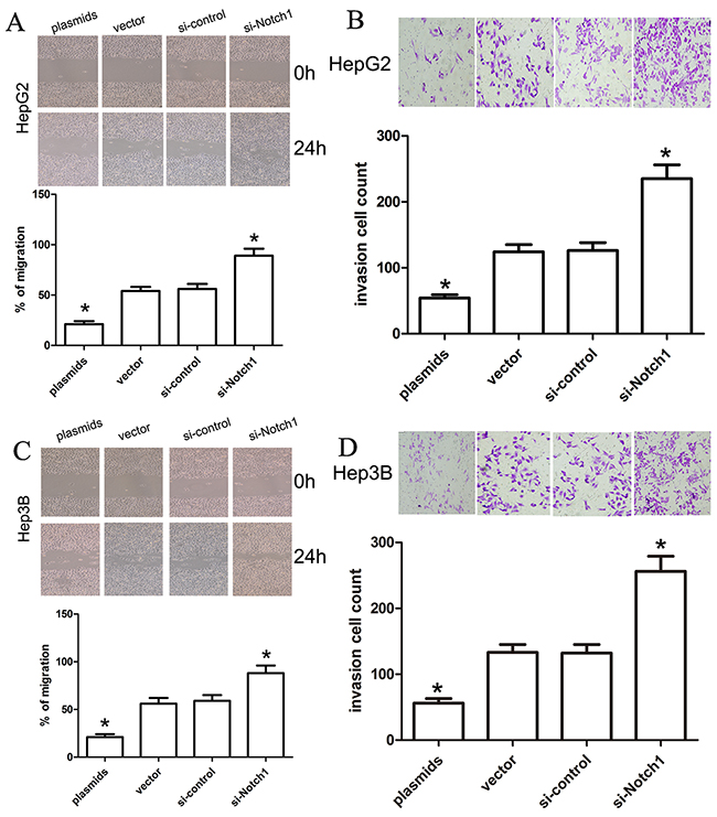 Notch1 affects the migration and invasion ability of liver cancer cells.