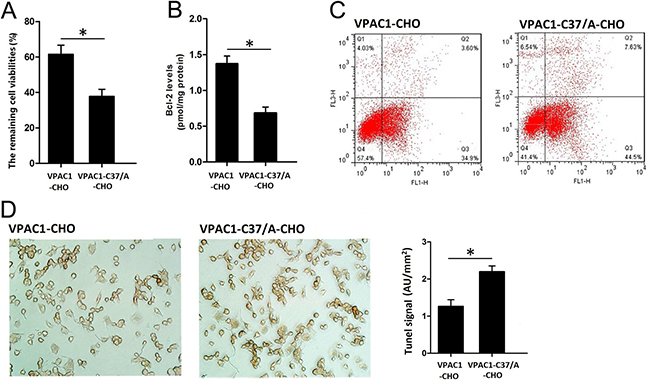 VPAC1-CHO cells had higher anti-apoptotic activity than VPAC1-C37/A-CHO cells against CPT induced apoptosis.