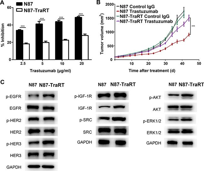 Establishment of trastuzumab-resistant gastric cancer cell line NCI-N87-TraRT.
