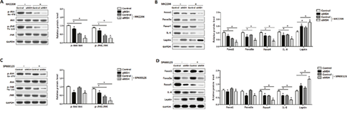 Akt/JNK signal pathway is impaired in the inhibition of αMSH on adipocyte inflammation and FoxOs expressions.