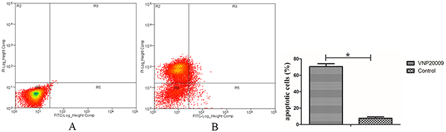 VNP 20009 induces apoptosis of McA-RH7777 cells.