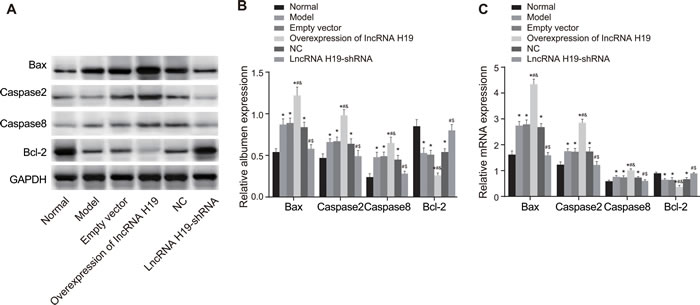 The expressions of apoptosis-related proteins in the hippocampus tissues of rats in each group were detected by qRT-PCR and Western blotting.