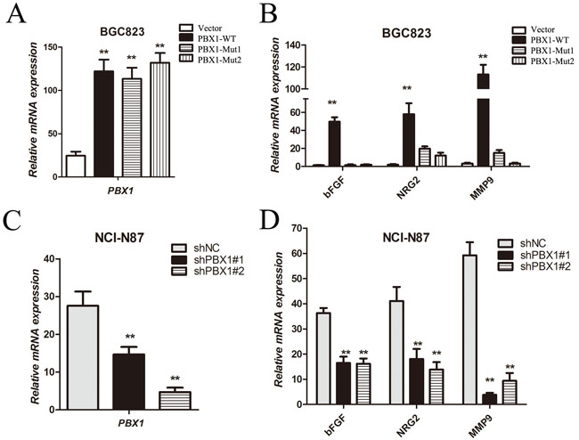 Tumor growth and angiogenic factor expression regulated by PBX1 in GC cells.