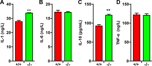 TRIM32–/– mice exhibited elevated cytokines following spinal cord injury.