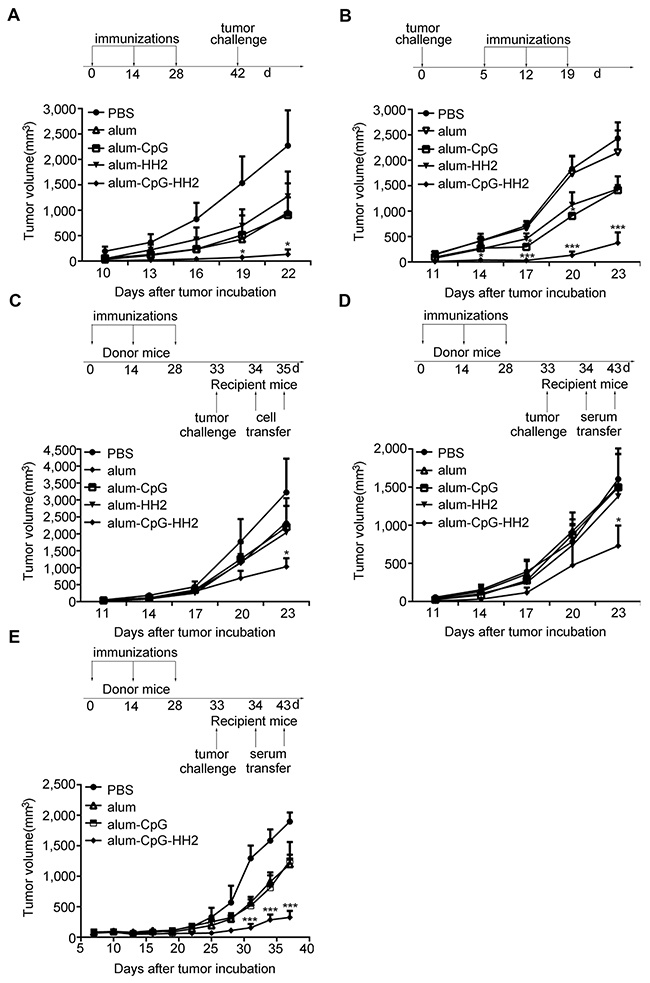 Enhanced anti-tumor immunity by alum-CpG-HH2-NY vaccine in melanoma models.