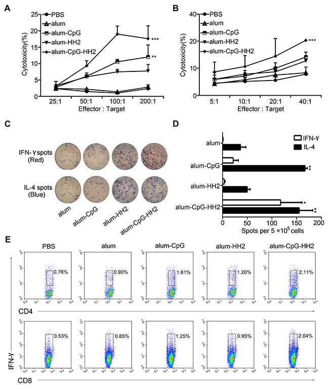 NK cytolytic activity and specific cellular response elicited by alum-CpG-HH2-NY vaccine.
