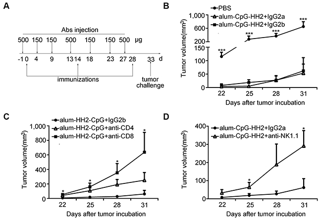 Impaired protection of alum-CpG-HH2-NY-immunized mice by depletion of the immune cell subsets.