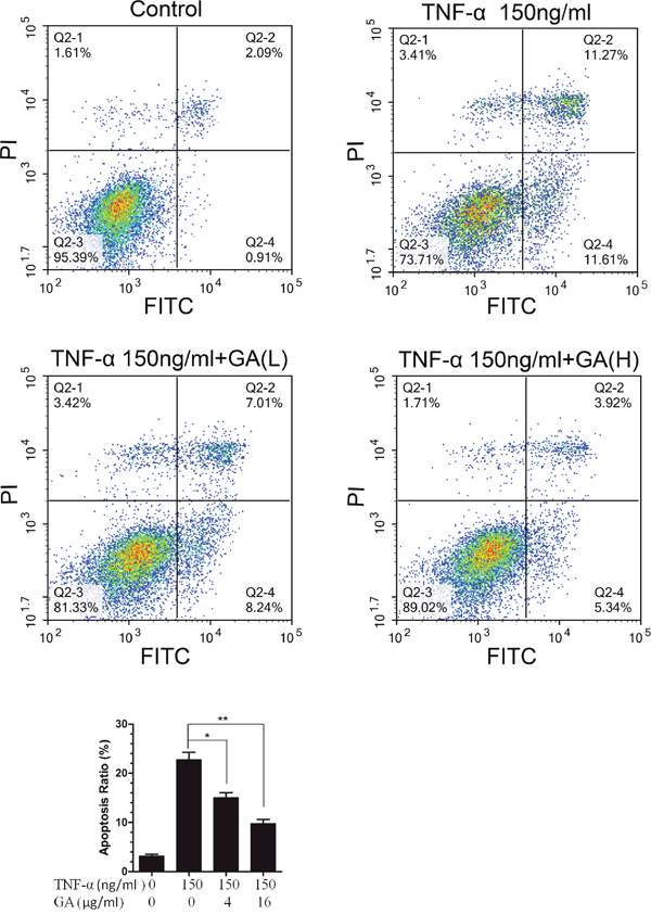 GA resists TNF-α-induced apoptosis in hNPCs.