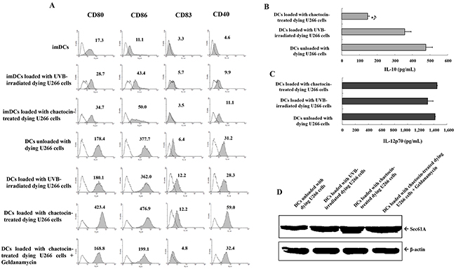 Characterization of dendritic cells (DCs) loaded with dying U266 cells.