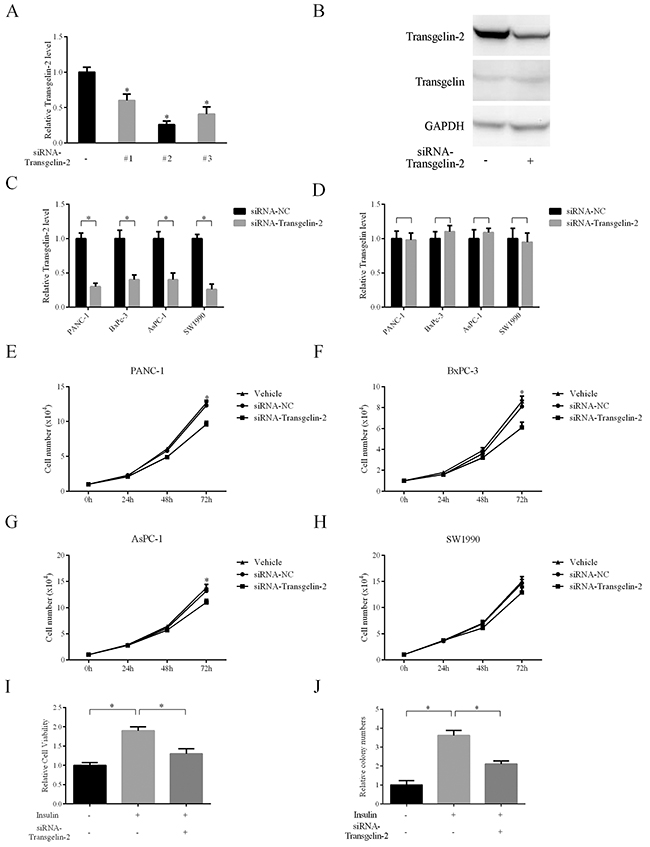 Impact of transgelin-2 depletion on proliferation of PDAC cells.