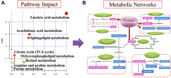 Pathway and metabolic networks analysis.