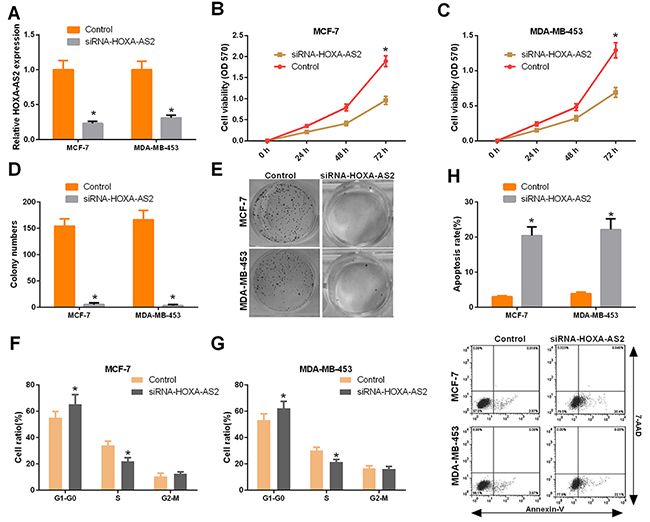 Silencing of HOXA-AS2 inhibited the progression of breast cancer.