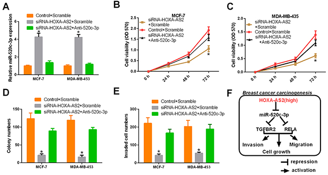 HOXA-AS2 promotes proliferation and invasion of breast cancer by miR-520c-3p.