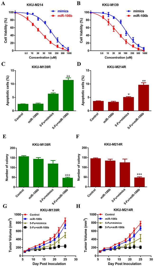 miR-106b re-sensitizes CCA cells to 5-FU.