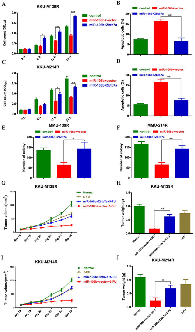 Zbtb7a is the functional target of miR-106b in modulating CCA cells sensitive to 5-FU.