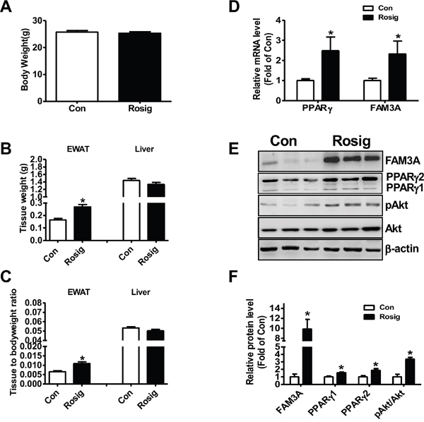 Rosiglitazone administration upregulated FAM3A expression in adipose tissues of C57BL/6 mice.