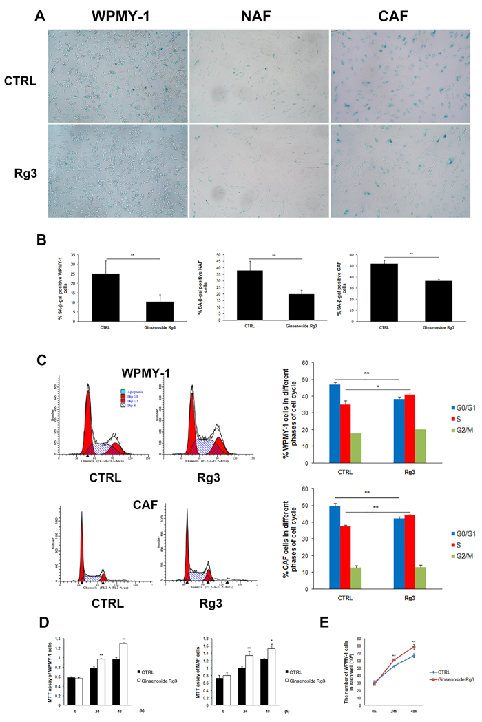 Ginsenoside Rg3 inhibited senescence of prostate stromal cells incubated in serum starvation condition.