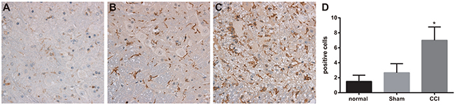 Expressions of OX-42 detected by immunohistochemistry among the control, sham and chronic constriction injury (CCI) groups.