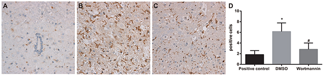 Effect of injection of wortmannin on expressions of OX-42 detected by immunohistochemistry.