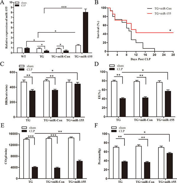 Increased expression of miR-155 attenuates Arrb2 overexpression (TG) mice cardiac dysfunction and improves survival in late sepsis.