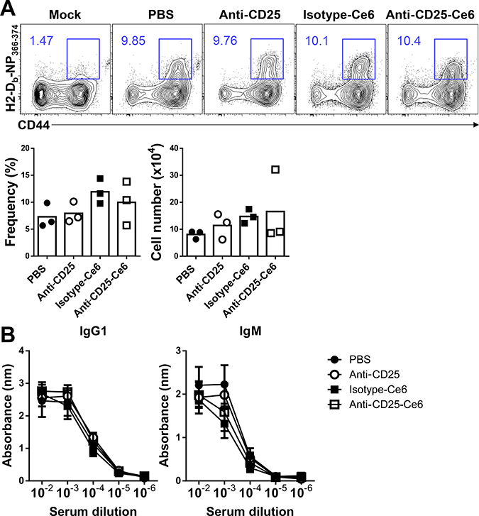 Anti-CD25-Ce6-targeted PDT does not affect the adaptive immune response against influenza infection.
