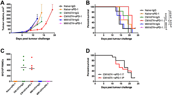 Heterologous ChAdOx1-MVA h5T4 vaccination regime in combination with anti PD-1 therapy significantly improves survival in B16.h5T4 melanoma tumour model compared with homologous MVA h5T4 vaccination combined to anti PD-1 therapy.