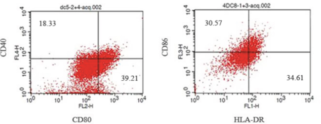 Analysis of DCs cells positive for CD40, CD80, CD86 and HLA-DR by flow cytometry.