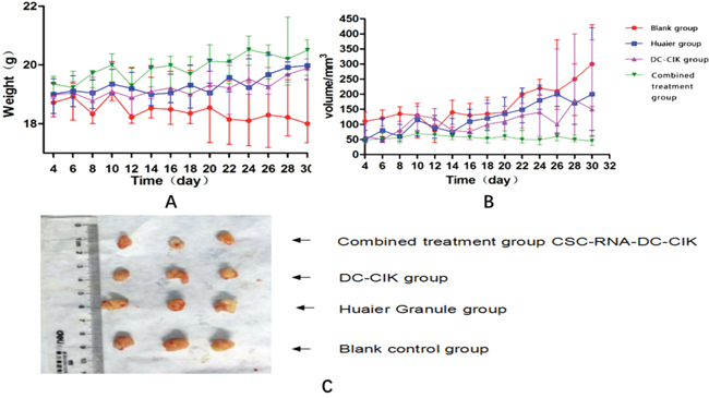 Physical examinations of tumor-bearing nude mice during treatment.