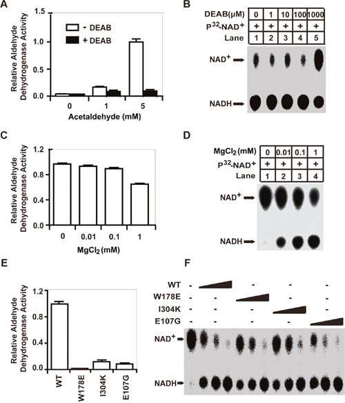 The enzymatic mechanisms of the aldehyde-dehydrogenase activity and the GSH/DHLA-dependent NAD+-reduction activity of ALDH1A1 are distinct.