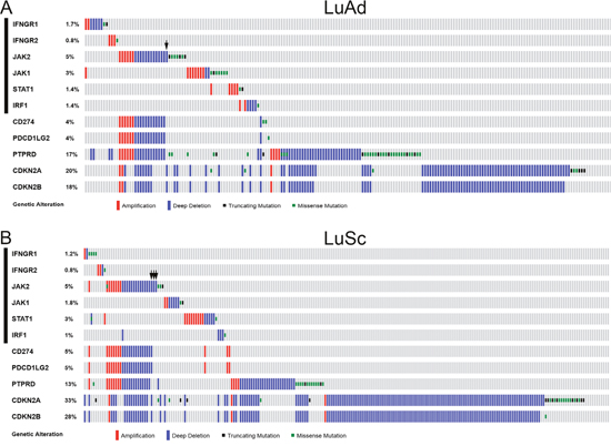 Genetic alterations of IFNγ-IRF1 pathway and selected chromosome 9p genes in NSCLC.
