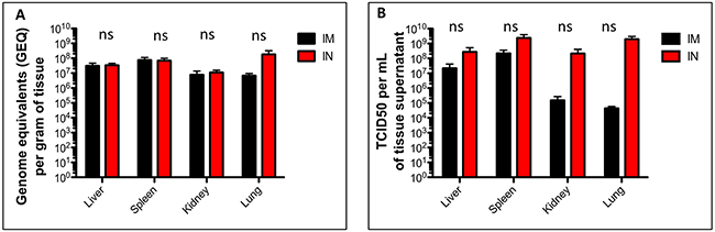 Viral burden in tissues of SUDV-infected ferrets.