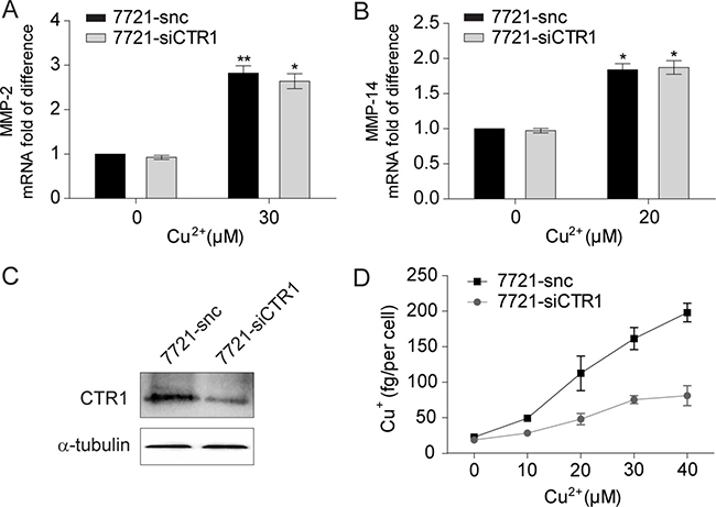Intracellular uptake is not required for copper to up-regulate MMP-2 and MMP-14 expression.
