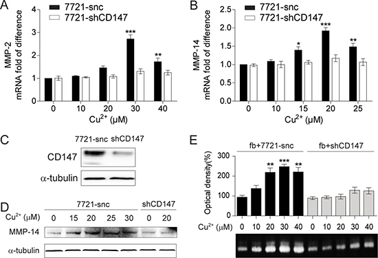 The MMP-inducing activity of Cu2+ is CD147 dependent.