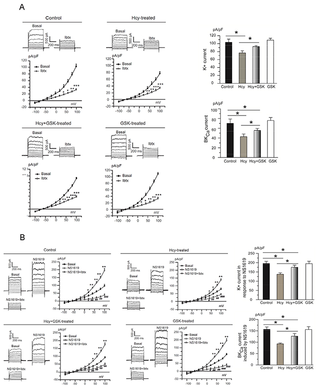 Homocysteine exposure suppresses BKCa channel currents in PCASMCs.