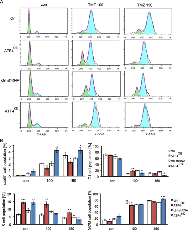 The effect of ATF4 on TMZ-induced G2/M arrest in gliomas.