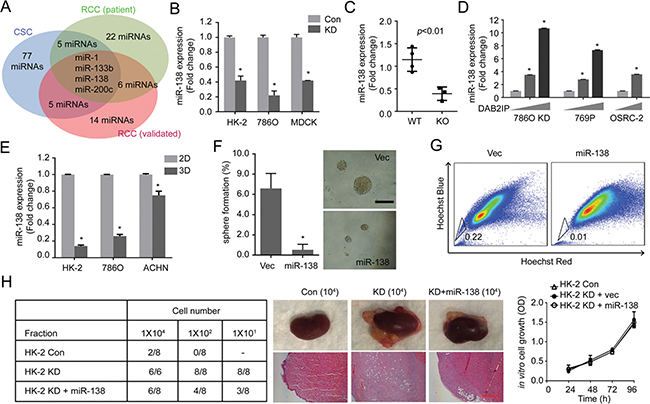 miR-138 is regulated by DAB2IP to suppress stem-like phenotypes in RCC.