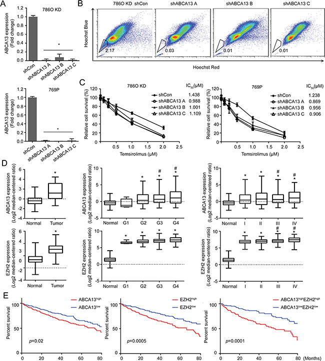 ABCA13 confers drug resistance of RCC and correlates with the overall survival of RCC patients.
