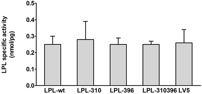 Functional analysis of LPL mutants in the cell lysates.