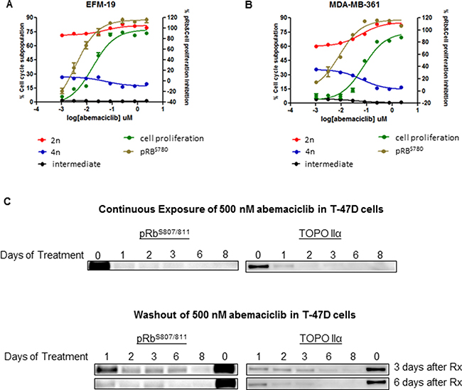 Abemaciclib inhibited cell proliferation, and led to G1/S arrest and a long-term reduction in phosphorylation of Rb in ER+ breast cancer cell lines.