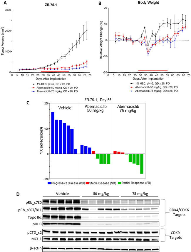 Abemaciclib monotherapy induces regression of ER+ breast cancer xenografts.