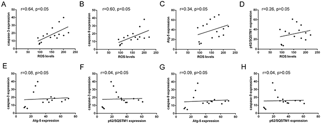 Correlated trend between ROS levels and Atg-5, p62/SQSTM1, caspase-3 or caspase-9 expression.