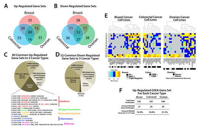 GSEA analysis of transcripts regulated by AZA in breast, colorectal, and ovarian cancer cell lines reveals pathways common to all three cancer types.