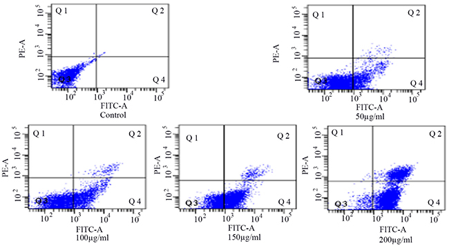 Detection of the apoptosis of HSCs-T6 cells treated with different concentrations of blueberry anthocyanins for 36h.