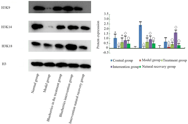 The protein modification of liver group of rats in each group.