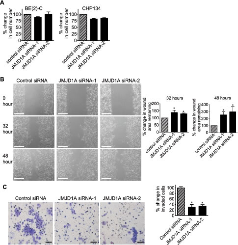 JMJD1A induces neuroblastoma cell migration and invasion.