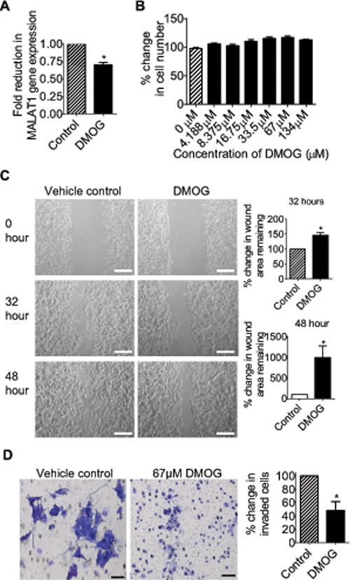 The JMJD1A inhibitor DMOG suppresses neuroblastoma cell migration and invasion.