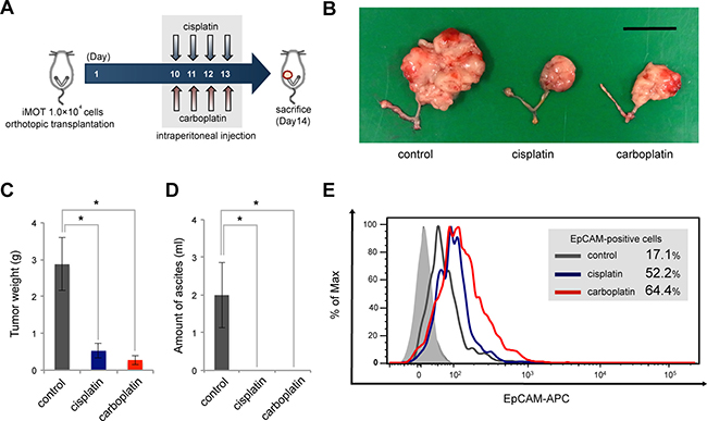EpCAM-positive ovarian cancer cells are correlated with tumor resistance to chemotherapy in an in vivo mouse model.